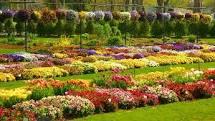 dallas garden 3